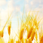 Nxtbook 6 - Grain