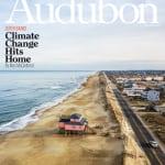 Audubon Face Up